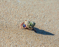 Cangrejo de ermitaño en la playa Imágenes de archivo libres de regalías