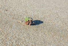 Cangrejo de ermitaño en la playa Foto de archivo libre de regalías