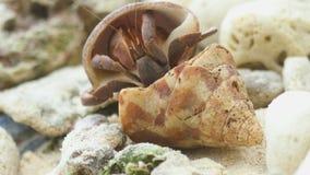 Cangrejo de ermitaño en la playa metrajes
