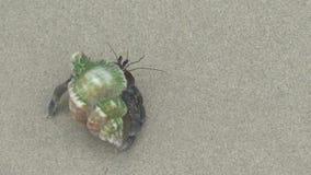 Cangrejo de ermitaño en la playa arenosa metrajes