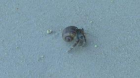 Cangrejo de ermitaño en la playa arenosa almacen de video