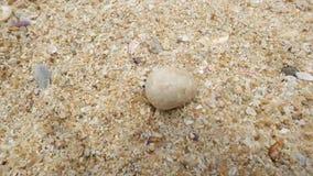 Cangrejo de ermitaño en la playa que corre lejos Visión superior metrajes