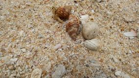 Cangrejo de ermitaño en la playa que corre lejos Visión superior almacen de metraje de vídeo