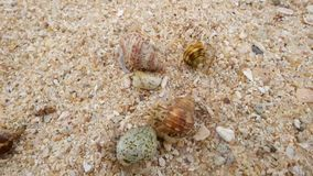 Cangrejo de ermitaño en la playa que corre lejos Visión superior almacen de video