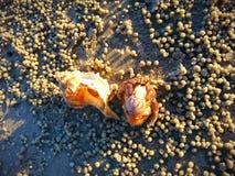 Cangrejo de ermitaño en la playa de Tanjung Sepat foto de archivo