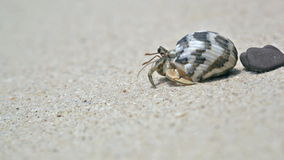 Cangrejo de ermitaño en una playa metrajes