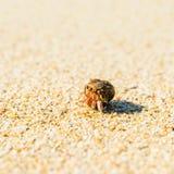 Cangrejo de ermitaño en una playa Fotografía de archivo libre de regalías