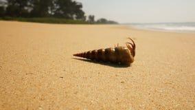 Cangrejo de ermitaño en una playa en el mar almacen de video