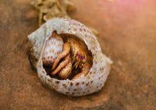 Cangrejo de ermitaño que oculta en una concha marina quebrada que miente en la arena foto de archivo libre de regalías