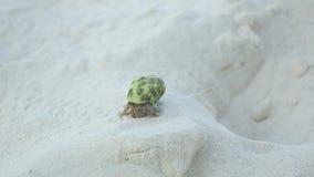Cangrejo de ermitaño que se arrastra en la arena almacen de metraje de vídeo