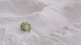 Cangrejo de ermitaño que se arrastra en la arena metrajes