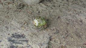 Cangrejo de ermitaño que se arrastra en la arena almacen de video