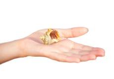 Cangrejo de ermitaño que se arrastra en la mano Imágenes de archivo libres de regalías
