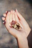 Cangrejo de ermitaño que se arrastra en la mano Imagen de archivo