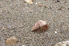 Cangrejo de ermitaño que se mueve adelante en una playa arenosa fotos de archivo
