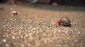 Cangrejo de ermitaño que se va en la playa en la cámara lenta almacen de video