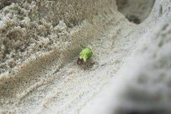 Cangrejo de ermitaño verde Fotos de archivo