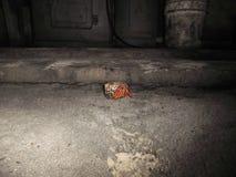 Cangrejo de ermita?o fotografía de archivo