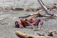 Cangrejo de la playa Fotos de archivo