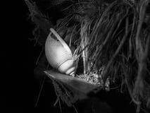 Cangrejo del eremita en cáscara Imagen de archivo libre de regalías
