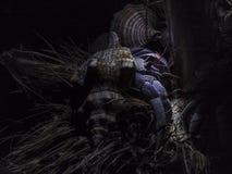 Cangrejo del eremita en cáscara Imagen de archivo