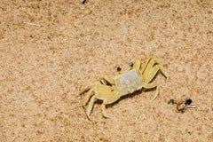 Cangrejo del fantasma que mezcla adentro en la playa Foto de archivo libre de regalías