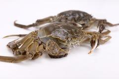 Cangrejo del río - una clase de cangrejo chino imágenes de archivo libres de regalías