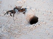 Cangrejo en la arena en las Seychelles Imágenes de archivo libres de regalías