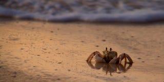 Cangrejo en la playa Fotografía de archivo