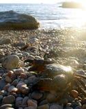 Cangrejo en la playa Imagen de archivo