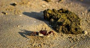 Cangrejo en la playa Imágenes de archivo libres de regalías