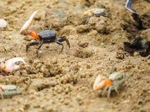 Cangrejo en la playa de Shela Foto de archivo libre de regalías