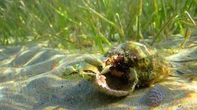 Cangrejo en shell bajo el mar Fotos de archivo