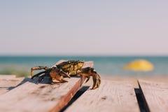Cangrejo que se relaja en la playa fotografía de archivo libre de regalías