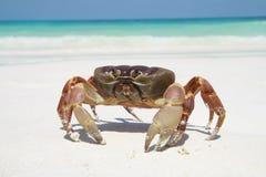 Cangrejo rojo en la playa Foto de archivo libre de regalías