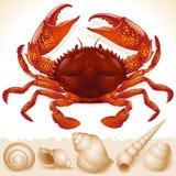 Cangrejo rojo y poco seashell Foto de archivo
