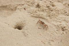 Cangrejo solo de la playa fotografía de archivo