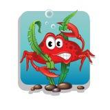 Cangrejo y algas Imágenes de archivo libres de regalías