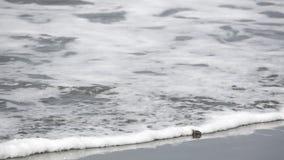 Cangrejo y mar de ermitaño en la playa en la cámara lenta metrajes