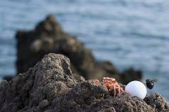 Cangrejo y pelota de golf en rocas Imagenes de archivo