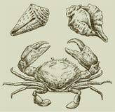 Cangrejo y seashells Fotografía de archivo libre de regalías