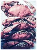 Cangrejos azules de la garra Imagen de archivo libre de regalías