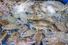 Cangrejos azules frescos que empapan en agua con el tubo del oxígeno Fotografía de archivo libre de regalías