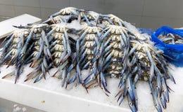 Cangrejos azules para la venta en el mercado de pescados imagen de archivo