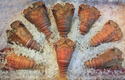 Cangrejos congelados Imagen de archivo