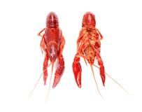Cangrejos crudos rojos Fotografía de archivo