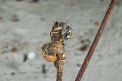 Cangrejos de ermitaño Fotos de archivo libres de regalías