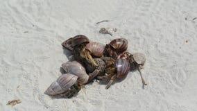 Cangrejos de ermitaño en una playa