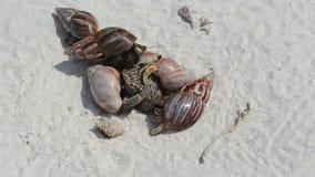Cangrejos de ermitaño en una playa almacen de metraje de vídeo