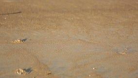 Cangrejos de la arena en la playa metrajes